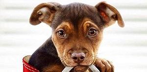 Добрый семейный фильм про собаку